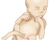 임신주기별 정보 - 임신 17주차